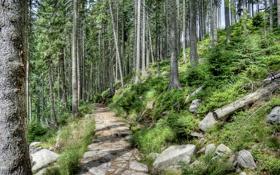 Обои лес, деревья, парк, камни, склон, дорожка, тропинка