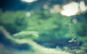 Картинка зелень, трава, листья, макро, свет, природа, блики