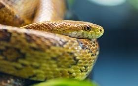 Картинка глаза, змея, чешуя