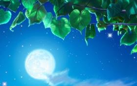 Обои Yutaka Kagaya, небо, ночь, листва, луна, дерево, листья