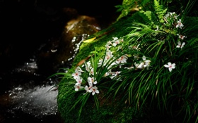 Обои трава, макро, растения, цеты