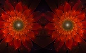 Обои цветы, красный, фрактал