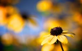 Обои цветок, цветы, фокус, лепестки, макро фото