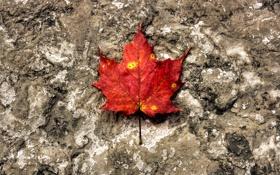 Картинка осень, макро, лист, камень, текстура, оранж
