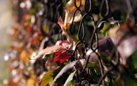 Обои осень, листья, макро, природа, фото, сетка, обои