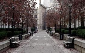 Обои дорога, листья, деревья, парк, улица, окна, Город