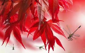 Картинка осень, листья, макро, коллаж, вектор, стрекоза