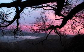 Обои закат, ветки, небо, дерево