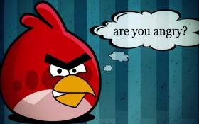 Обои красная птица, angry, angry birds, вопрос, злые птицы