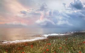 Картинка море, облака, цветы, прибой
