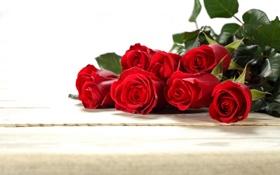 Обои красные, бутоны, розы