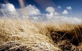 Обои поле, лето, небо, солнце, облака, обои, растения