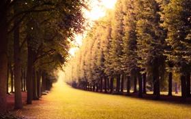 Картинка деревья, природа, травка, алея
