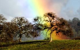 Картинка rainbow oak, дуб, радуга, дерево
