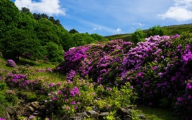 Обои камни, ручей, деревья, природа, кустарники, цветы