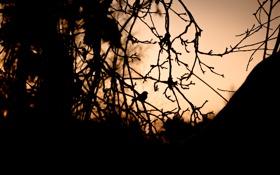 Картинка деревья, ветки, птица, вечер, сумерки, силуэты