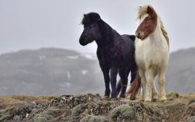 Обои исландия, горы, кони, ветер, камни