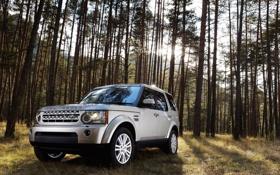 Обои Discovery, Автомобиль, 2010, Лес, Land Rover, Дискавери, Машина