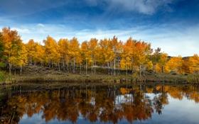 Картинка осень, небо, облака, деревья, озеро, пруд