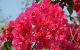 Обои лето, природа, цветочки, красивые, веточки