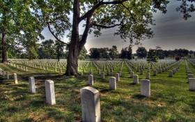 Обои кладбище, память, Arlington National Cimetery