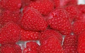 Обои малина, ягода, красная, вкусная