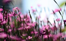 Обои цветы, фото, стебли, лепестки, размытость