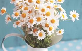 Картинка ромашки, лепестки, кувшин, цветочки
