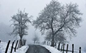 Обои контраст, ветки, чёрный, ограда, деревья, белый, дорога