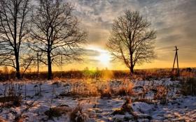 Обои закат, трава снег, деревья, природа