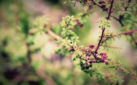 Обои листья, макро, ветки, Природа, весна