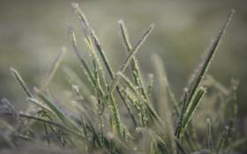Обои трава, мороз, макро