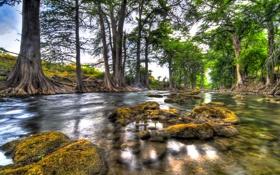 Картинка лес, небо, деревья, пейзаж, природа, река
