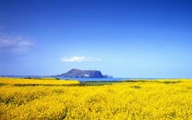 Обои море, поле, небо, горы, залив, рапс