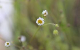Картинка поле, цветок, макро, природа