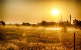 Обои поле, трава, солнце, деревья