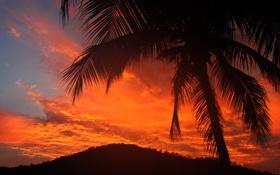 Картинка облака, небо, зарево, пальма, силуэт, дерево