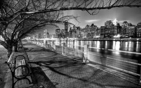 Обои деревья, ночь, город, черно-белый, Нью-Йорк, USA, США