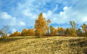 Картинка пейзаж, осень, поле