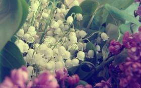 Обои ландыши, сирень, букет. цветы