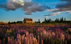 Картинка небо, облака, цветы, дом, холм, вереск