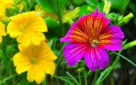 Обои сад, листья, лепестки, природа