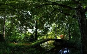 Картинка деревья, лавочка, зелень, мост, отражение, вода