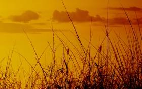 Обои трава, небо, фото, поле, вид, обои, природа