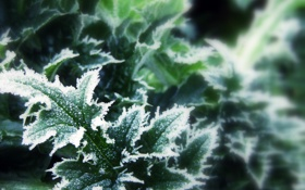 Обои зима, листья, снег, макро, фокус