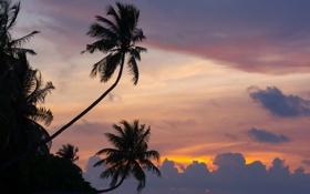 Обои закат, природа, пальмы, океан, мальдивы