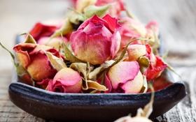 Обои розы, сухие, rose, бутоны, wood, romance, bud