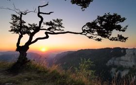 Картинка горы, утро, дерево
