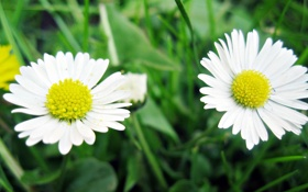Обои цветок, трава, макро, цветы, желтый, природа, зеленый