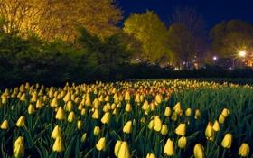 Обои город, тюльпаны, цветы